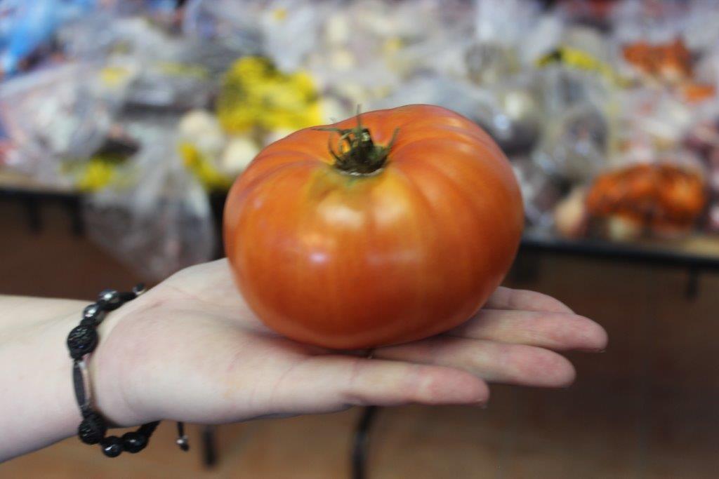 Veg Grdn31032016 big tomato